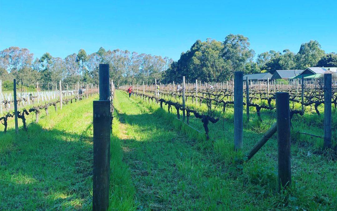 Marq Winery Vineyards